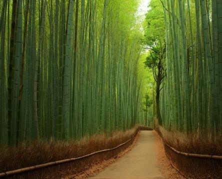 Bosque-de-bambú